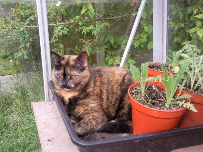 cleo in the greenhouse