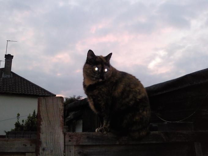 cleo on the fence, plotting her revenge....