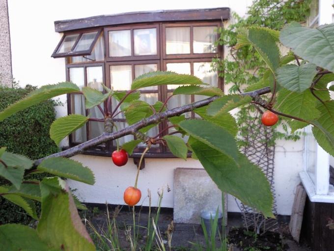 more cherries!