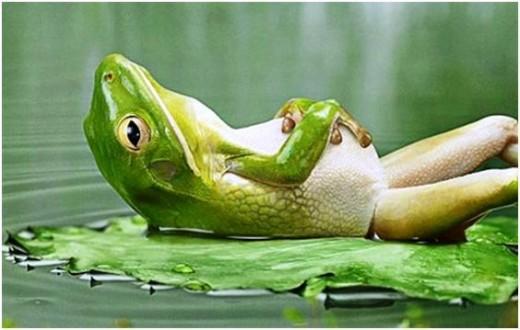 relax rana