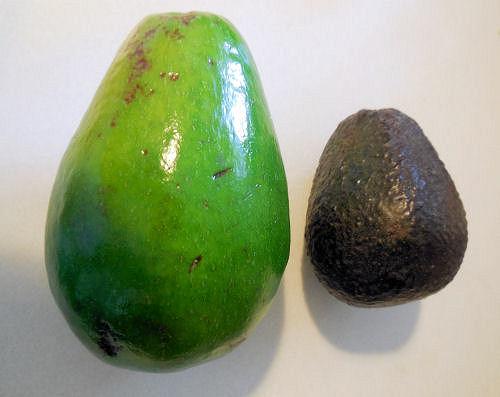 avocado10